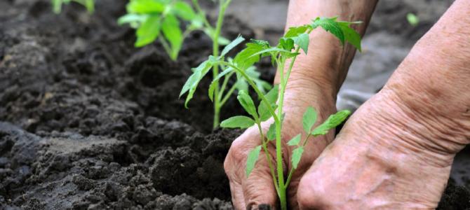 Requisitos para cotizar en el Régimen Agrario de la Seguridad Social